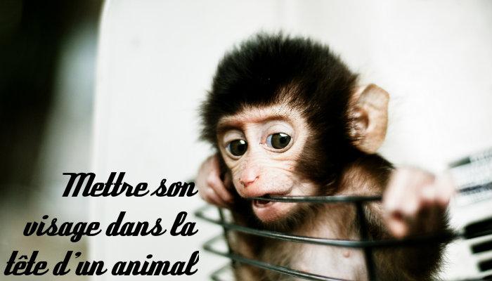 Mettre son visage dans la tete d un animal